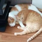 我が家の猫たち