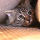 ペットと地震