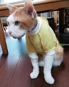 猫用Tシャツ