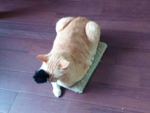 爪とぎで暖を取る猫