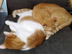 寒い時の猫の寝方