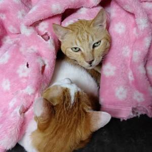 毛布をかけた猫
